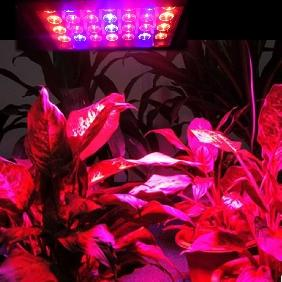 80W Grow Light Mixed Red + Blue Color Effect LED Bulb Lamp Coverage Area 2m*1.3m