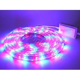 3M 5050 RGB Flash Multi-Color LED Bulb Light Flexible Strip Kit For AC 220V